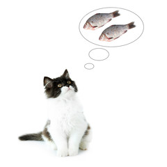 Little cute kitten dreaming of fish, isolated on white