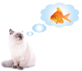 Beautiful cat dreaming of gold fish, isolated on white