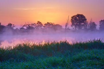 Misty dawn over  The Narew River, Poland. Nature reserve.