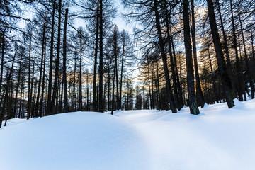 bosco Val d'aosta