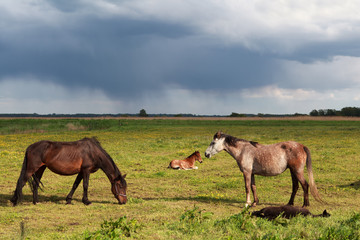 few horses and foals on pasture