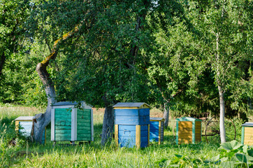 bee hives under fruit trees in garden. Beekeeping
