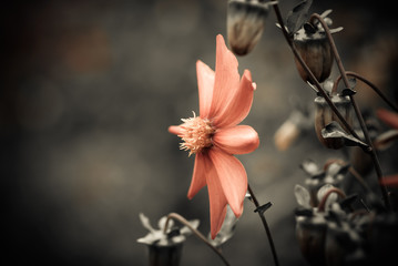 fall season red flower closeup