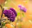 beautiful fall season flowers