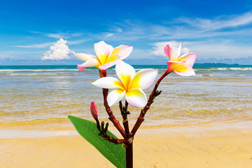 Flower at beauty beach
