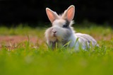 Cute Rabbit on Green Grass - 64681571