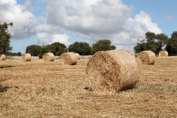 Rotoballe di fieno nella campagna Iblea