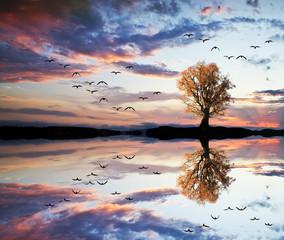 reflejos en el lago © kesipun