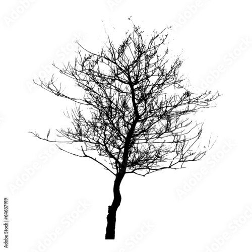 Tree Silhouette Isolated on White Backgorund. Vecrtor Illustrati - 64687919