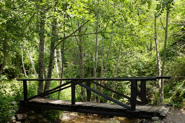 Wooden Bridge In The Wood, Serbia