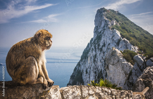Tuinposter Aap Monkey in Gibraltar