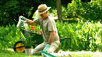 Retired man watering his plant