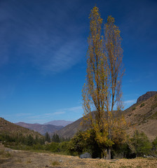 Autumn in the Andes