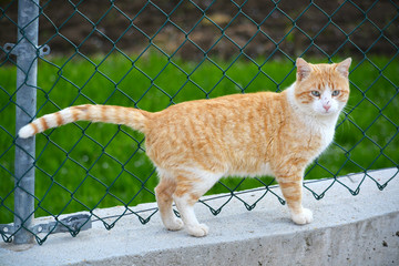 gato naranja y blanco en alambrada metalica