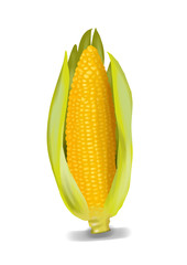 Simple, realistic yellow corn illustration, front view.