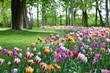 canvas print picture - Tulips color