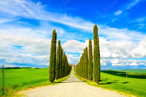 Tuscany, Cypress Trees white road rural landscape, Italy, Europe - 64690993