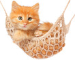 Cute red haired kitten lay in hammock