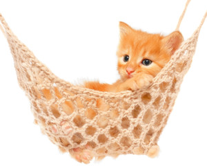 Cute red haired kitten lie with in hammock