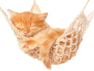 Cute red haired kitten sleeping in hammock.