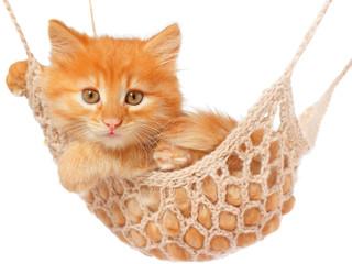 Cute red haired kitten lay in hammock.