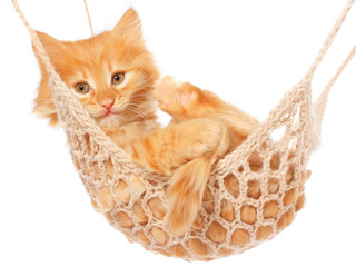 Cute red haired kitten lie with in hammock.