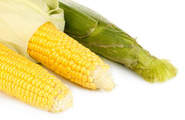 Fresh corn cobs isolated on white