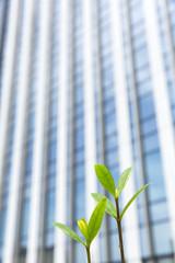 新芽と高層ビル