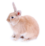 Cute rabbit, isolated on white - 64696307