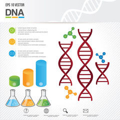 dna template