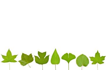 木の葉のフレーム