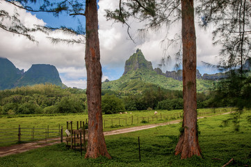 Farm Lands in Moorea.