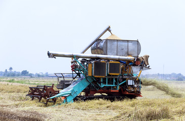Harvesting rice tractor working in rice farm.