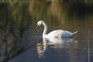 Pato pasea por el agua