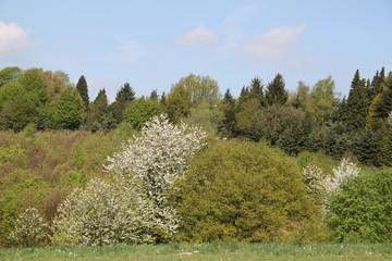 Friedliche Landschaft im Frühling