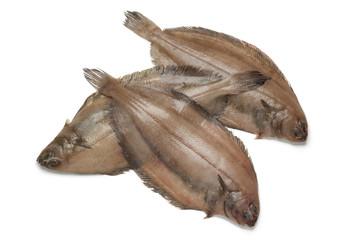 Fresh raw megrim fish