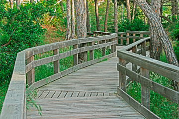 boardwalk in the pinewood