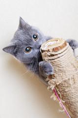 British cat scratching posts