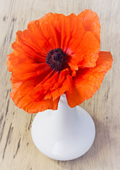 Red poppy flower in vase on wooden background.