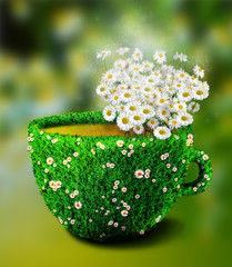 Herb tea cup from grass and flowers,healthcare and organic diet.