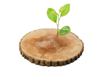 sawn wood cut green sprout