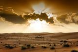 Fototapeta Desert Wahiba Oman