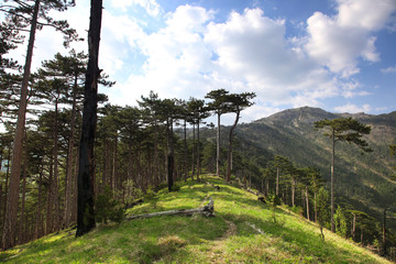 Crimean mountain landscape with pine trees