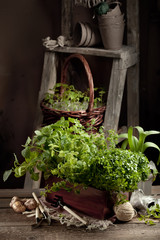 Gardening in the country - barn setting with herbs, seedlings an