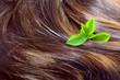 Leinwandbild Motiv Hair care concept: beautiful shiny hair with green leaves