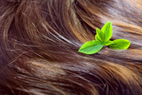 Hair care concept: beautiful shiny hair with green leaves