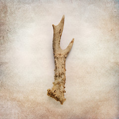 Vintage background with deer antler