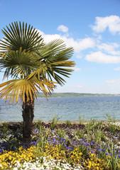 Пальма на Майнау