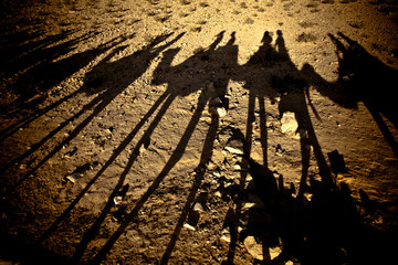 Camel shadows in the Desert