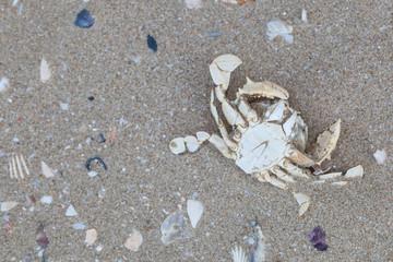 Dry dead crabs on the beach